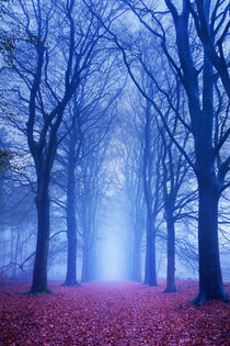 Path in a dark and foggy forest in The Netherlands by Sara Winter
