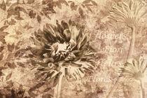 Blume-dahlie
