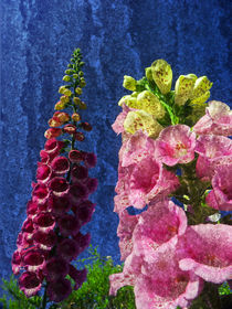 Two Foxglove flowers on texture reaching for the sky. by Robert Gipson