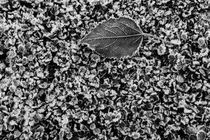 Leaf Frost by Jim Corwin
