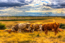 The Friendly Cows by David Pyatt