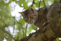cat high up in tree look down by anja-juli