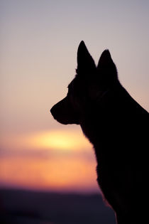 Dog wolf head back light silhouette in sunset by anja-juli