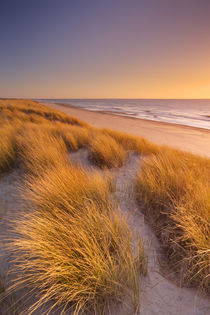 Dunes and beach at sunset on Texel island, The Netherlands by Sara Winter