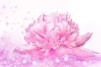 Rosa Blume, Fantasy von darlya
