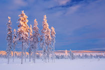Snowy landscape in Finnish Lapland in winter at sunset von Sara Winter