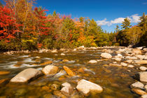 River through fall foliage, Swift River, New Hampshire, USA by Sara Winter