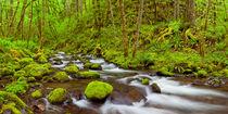 Gorton Creek through lush rainforest, Columbia River Gorge, Oregon, USA von Sara Winter