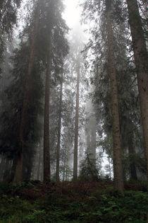 Nebelwald von Jens Berger