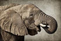Afrikanischer Elefant by AD DESIGN Photo + PhotoArt