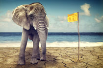 Elefant am Meer  by AD DESIGN Photo + PhotoArt