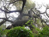 Baum am See-3 von peter norden
