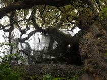 Baum am See-5 von peter norden
