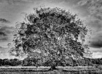 der Baum 4 von Jens Hennig