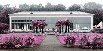Magenta garden von Mario Fichtner
