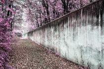 Magenta wall von Mario Fichtner