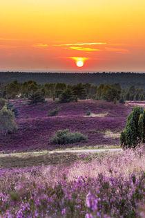 Abends in der Lüneburger Heide von Dennis Stracke