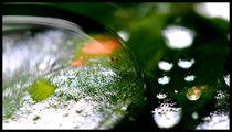 nach dem regen ll by k-h.foerster _______                            port fO= lio