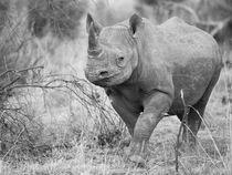 Black rhino in approaching camera in B&W by Yolande  van Niekerk