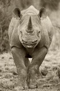 Wild Black rhino in Black and White by Yolande  van Niekerk