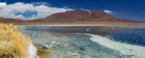 Desert lake Laguna Cañapa, Altiplano, Bolivia on a sunny day by Sara Winter