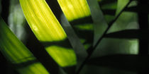 Tropischer-regenwald-honduras-03