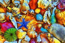 Muscheln-abstrakt