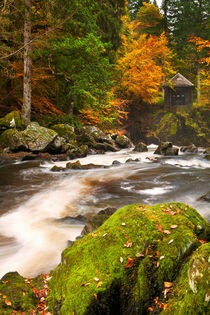 River through autumn colours at the Hermitage, Scotland by Sara Winter