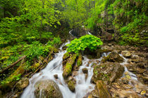 Waterfall in a lush gorge in Slovenský Raj, Slovakia by Sara Winter