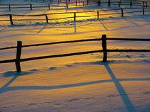 Pferdekoppel im Winter by brava64