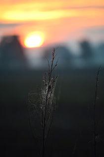 HerbstlIch by Irmtraut Prien