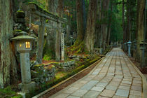 Path through Koyasan Okunoin cemetery, Wakayama Prefecture, Japan by Sara Winter