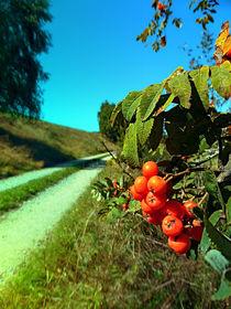 'Beeren am Wanderweg' by Patrick Jobst