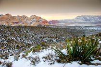 Red Rock Canyon, National Conservation Area, Nevada, Mojave desert, USA. by Perry  van Munster