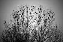 Sie sitzen in den Ästen by Bastian  Kienitz
