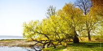 Baumgruppe auf Usedom von Rolf Müller