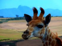 little giraffe by moyo