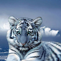 Blue-tiger-and-snow