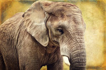 Elefant 4 by AD DESIGN Photo + PhotoArt