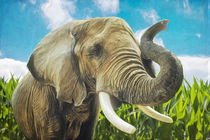 Elefant im Maisfeld von AD DESIGN Photo + PhotoArt