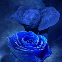 Blue Elephant and Rose von Erika Kaisersot