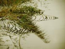 Spätsommerabend am Ufer von crazyneopop