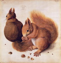Squirrels by Albrecht Dürer