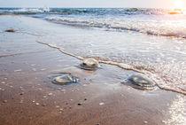 Large  jellyfish lies on the shore of a beach. von Serhii Zhukovskyi