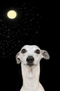 'Moonlight - Leni' by Heidi Bollich