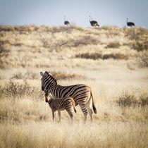 Zebras und Strauße by Jan Schuler