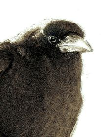 ONE CROW PORTRAIT by Jean Gregory Evans