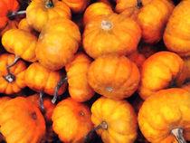 Baby Pumpkins by Susan Savad