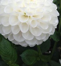 White elegance  by Ruth Baker