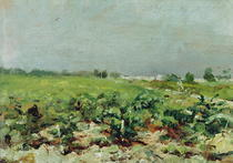Celeyran, View of the Vineyard by Henri de Toulouse-Lautrec
